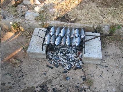 Žman - ribe za ručak